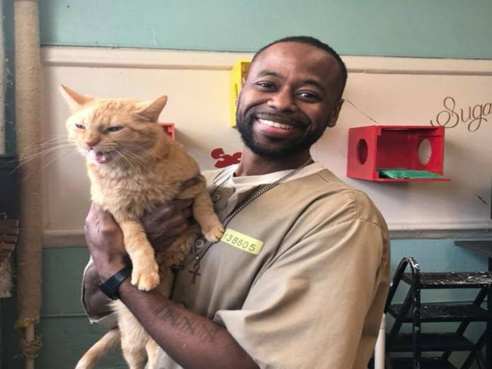 當<b>受刑人</b>遇見收容所貓咪 再凶悍的心也全都被融化!