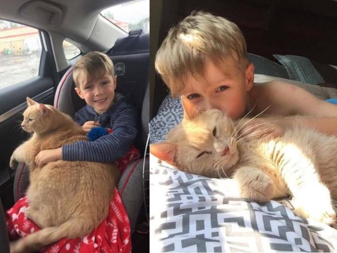十歲<b>老貓</b>沒人要 善良小男孩超識貨帶回家惜命命