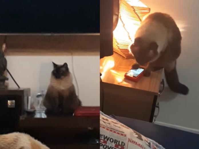 主人每天遲到 發現竟然是愛貓滑手機關掉<b>鬧鐘</b>!
