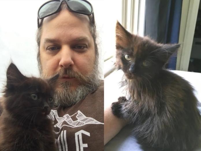 出差遇小浪貓黏上肩頭討摸摸 粗獷男:牠偷走了我的心!