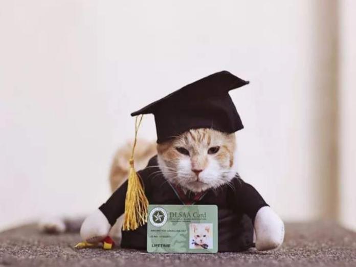 橘白貓Archer因為太愛吃,讓學校提前為牠舉行畢業典禮(圖/inquirer.net)
