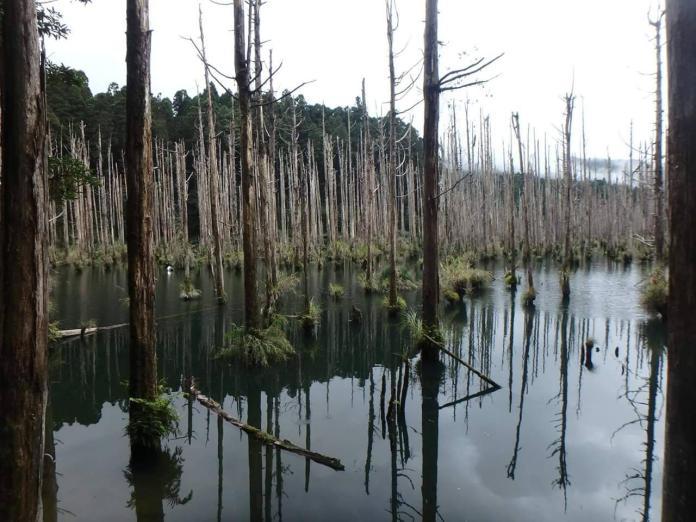 ▲眾多遊客在水漾森林紮營帶來排泄物、垃圾,造成環境問題。(圖/嘉義林管處提供,2019.08.14)