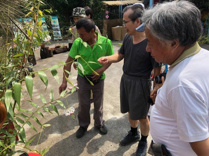 <br> ▲東社區發展協會今(17)舉辦復育成果展,讓這當地人稱「天使的翅膀」在台灣遍地開花。(圖/新北市農業局提供)