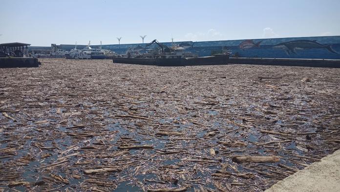 <br> ▲富岡漁港一夜之間湧入大批漂流木,今天上午部分漂流木隨著海流,被帶往海上。(圖/記者鄭志宏翻攝)
