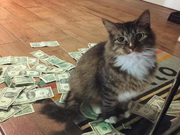 名副其實的招財貓!貓咪隔玻璃門賣萌 「搶」錢做公益!