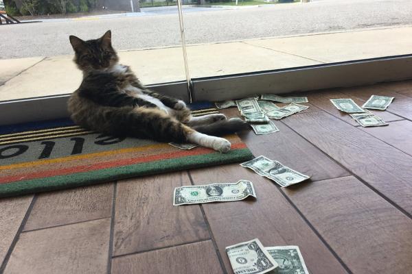 <br> 某天主人史都華上班時,發現辦公室門口多了一些美元紙鈔!(圖/FB@CASHnip Kitty)