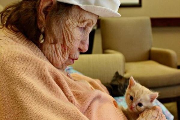 <br> 美國一間護理中心推動讓老人幫忙照顧奶貓的活動(圖/The Dodo)