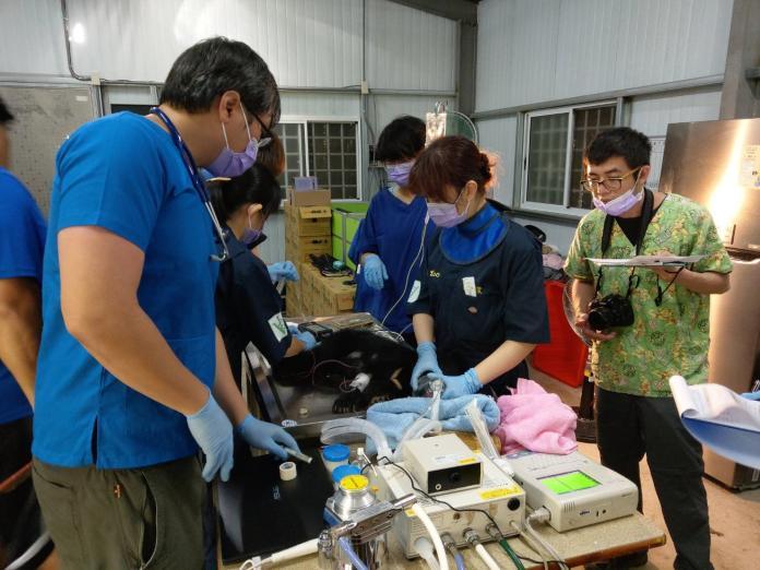 ▲台東廣原小熊28日進行體檢。(圖/台東林管處提供)