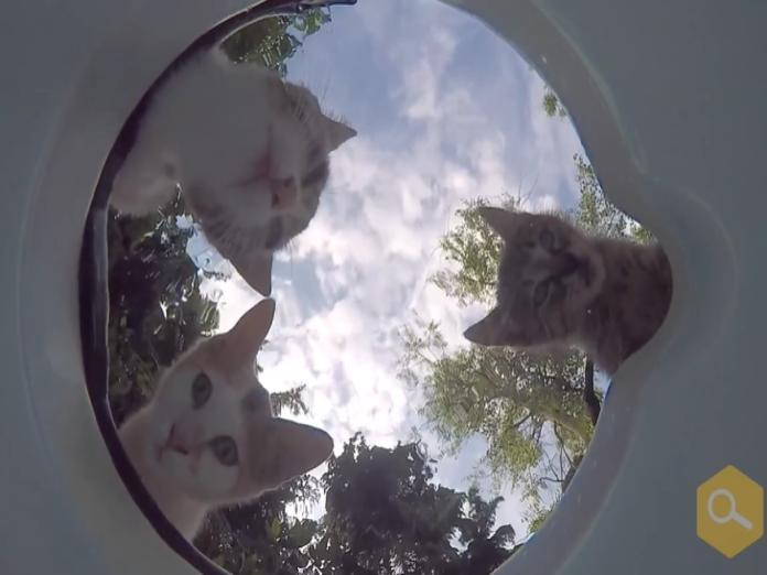 男子在水碗裡放攝影機 捕捉動物喝水萌萌瞬間