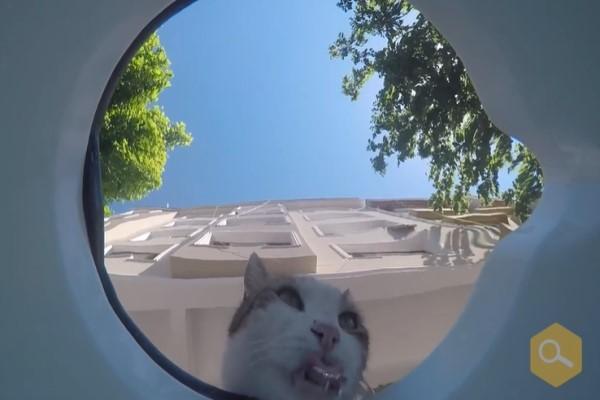 <br> 一隻貓咪出現在水盆前喝水(圖/翻攝自FB@Kimyasal Pazarı)
