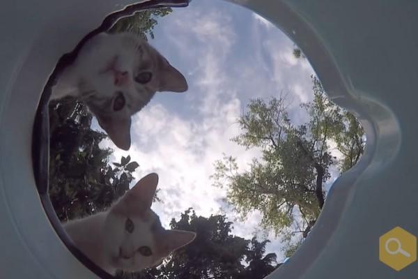 <br> 貓咪:這水盆有點奇怪!(圖/翻攝自FB@Kimyasal Pazarı)