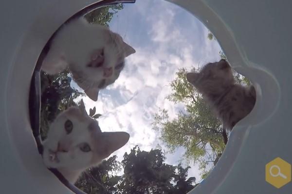 <br> 這個角度看貓咪好萌啊!(圖/翻攝自FB@Kimyasal Pazarı)