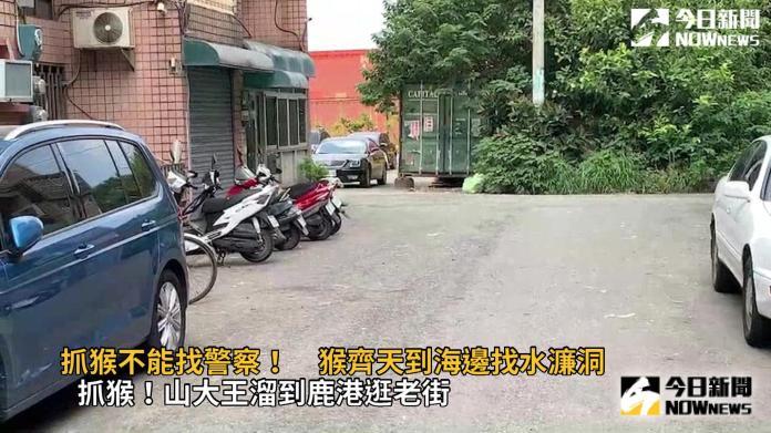 影/抓猴不能找警察!台灣彌猴遊蕩到彰化海邊