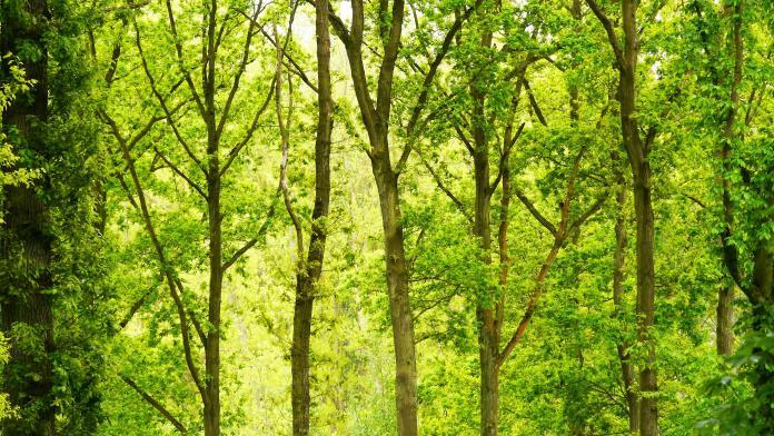 第一眼見到這張圖覺得是森林的人,通常意志堅定,不會被別人所左右