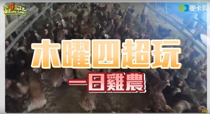 <br> ▲木曜 4 超玩 6 日播出新片 《一日雞農》。(圖/取自木曜 4 超玩 Youtube )