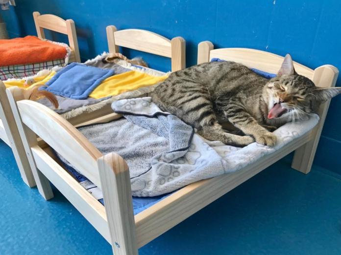 連鎖傢俱捐贈娃娃床給收容所 溫暖貓咪也增加領養率!