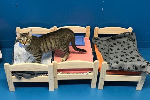 <br> 為了不讓貓咪在冬天還睡在冰冷的地板,業者捐贈10張娃娃床給Etobicoke人道協會的貓咪使用(圖/IG@etobicokehumanesociety)