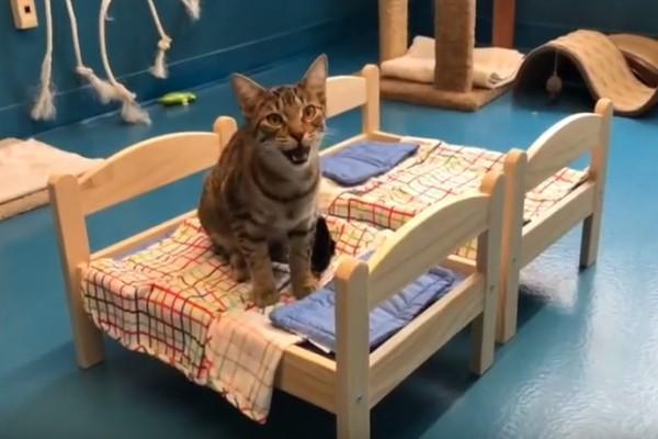 <br> Catsby:漂釀小姐偶有自備小床很可愛對不對,要鼻要帶偶回家一起睡呢?(圖/Youtube@Etobicoke Humane Society)