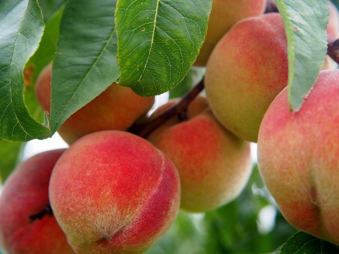 ▲水蜜桃。(示意圖/翻攝自 pixabay )