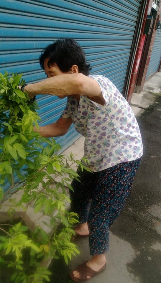 <br> ▲只見相片中可以看到,奶奶有著一頭烏黑亮麗的頭髮,非常的有精神的在修剪花木盆栽。(圖/翻攝自《爆廢公社》)