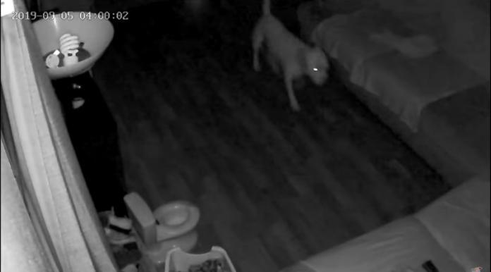 <br> 凌晨4點趁著四下無人,狗狗走到小馬桶旁邊繞來繞去,似乎在尋找適合的地點。(圖/Youtube@ViralHog)