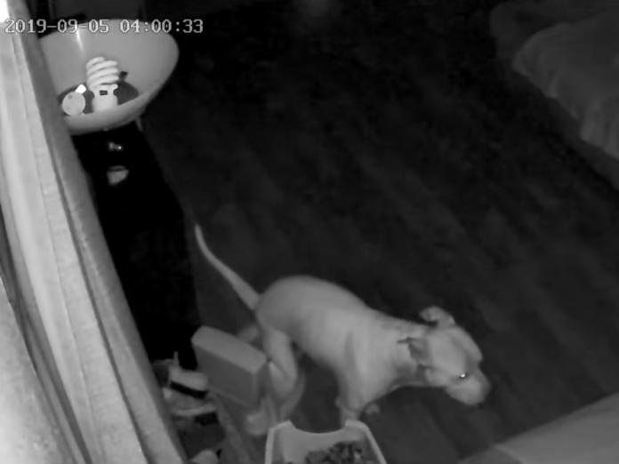凌晨回家驚見兒童馬桶有「黃金」 一調監視器男子全看傻!