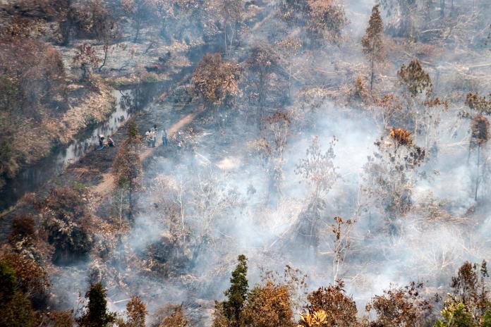 ▲印尼正遭受 3 年多以來最嚴重的森林野火,霾害也危及週邊國家。(圖/美聯社/達志影像)