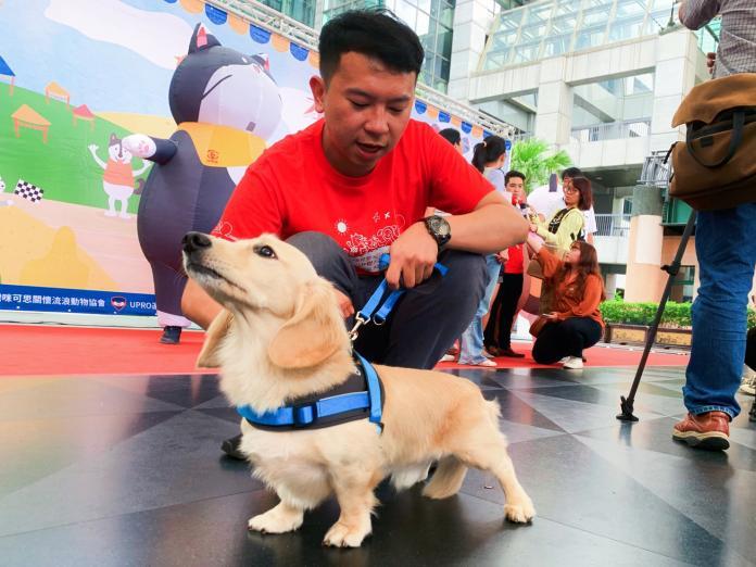 ▲咪可思關懷流浪動物協會於10月19日在三重大台北都會公園舉辦「咪可思公益路跑」。(圖/記者宋原彰提供)