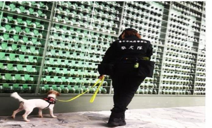 <br> ▲台中市警犬隊在今年台灣燈會的維安工作中,擔任重要角色。(圖/警方提供)