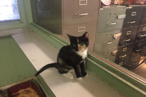 <br> Imgur用戶@mraeronautic在一次偶然的機會下遇見沒有媽媽的小貓Callie,從牠的眼神中找到平靜,於是認為牠應該也能讓妻子有同樣感覺(圖/imgur@mraeronautic)