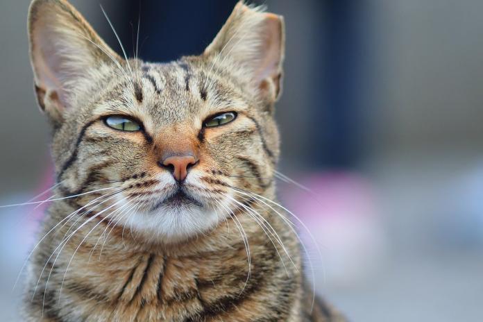 <br> ▲近年來許多飼主都會向寵物溝通師請教寵物問題。(示意圖/取自 Pixabay )