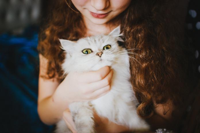 ▲近年來許多人都會帶自家毛小孩去做「寵物溝通」。(示意圖/取自pxhere)