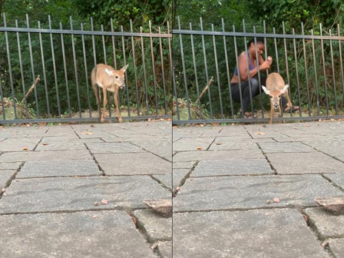 <br> 多爾希看到小鹿受困,趕緊過來搶救。(圖/Youtube@Chloé Dorsey)