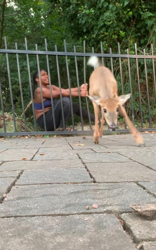 <br> 小鹿:穴穴好心人!偶不會再亂跑惹~掰掰~(圖/Youtube@Chloé Dorsey)