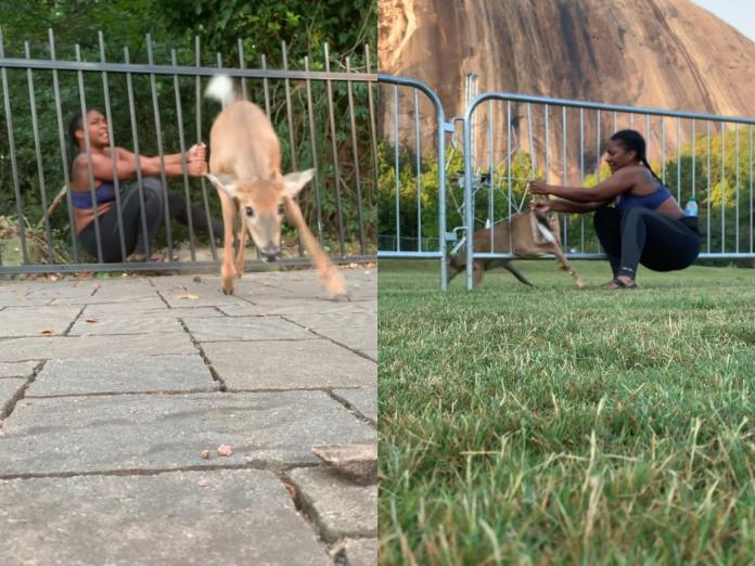 迷糊小<b>鹿</b>剛脫困30秒後又卡住 女子:跳跳課再重修一遍!