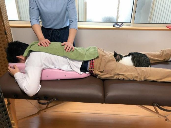 日本貓咪咖啡廳的另類推拿服務 竟有店喵幫忙暖屁屁!