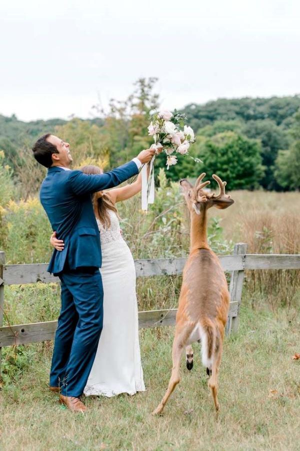 最萌慣犯!小鹿專闖婚紗照 給新人最夢幻的祝福!