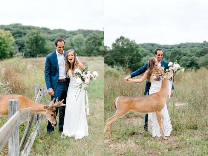 最萌慣犯!小<b>鹿</b>專闖婚紗照 給新人最夢幻的祝福