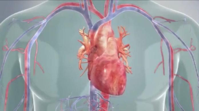 高齡瓣膜疾病免驚! 導管瓣膜植入術成功救心