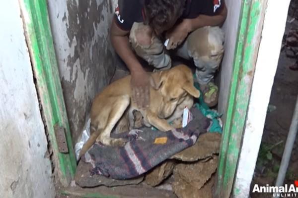<br> 救援人員先將母子移到一安全處,確認牠們平安後再將牠們帶回機構安置(圖/FB@Animal Aid Unlimited)