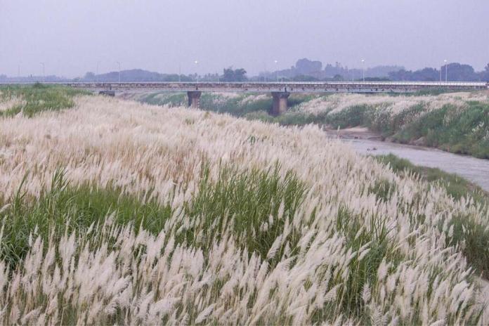 八掌溪花海祕境