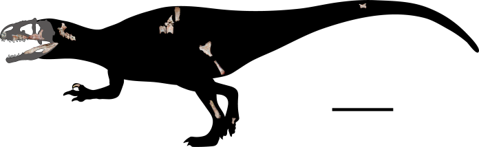 史上第一次!泰國挖掘出新型巨大肉食性<b>恐龍</b>化石