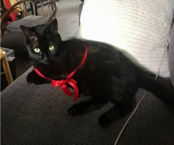 <br> 日本推主飼養的黑貓Luna非常擅長某一種特殊技能(圖/IG@roeselienraimond)