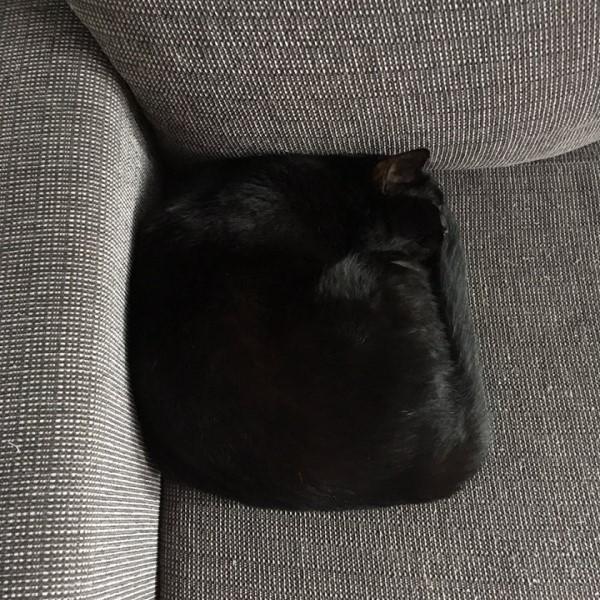 <br> 推主@isruk突然發現沙發上有一顆新抱枕,而且還毛茸茸的!(圖/twitter@isruk)