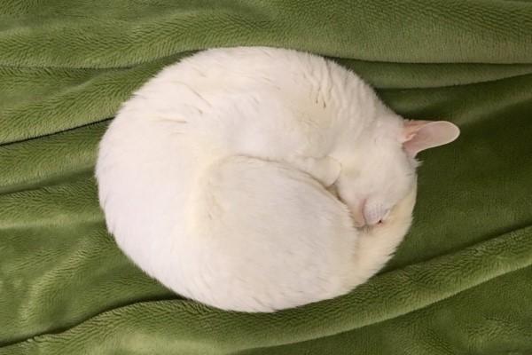 <br> @YAOSUGI:我家有一顆白色圓抱枕!(圖/twitter@YAOSUGI)