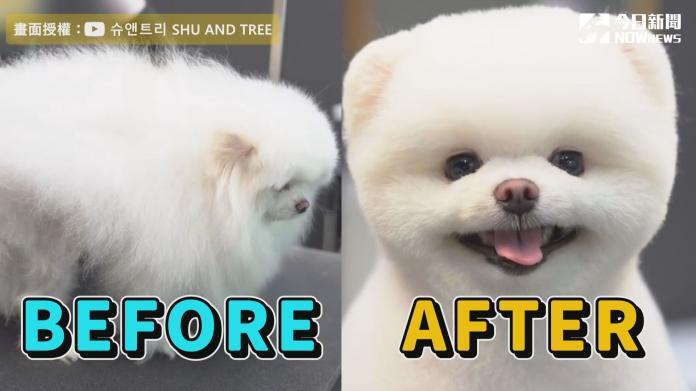 炸毛汪汪美容師巧手施法 超萌「北極熊」迷倒千萬網友