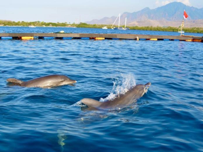 海豚被迫在酒店泳池表演15年 中毒失明滿身傷痕終獲救!