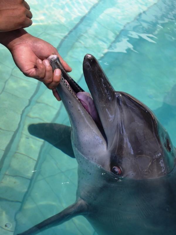 <br> 強尼則因為牙齒全部掉光,眼睛也受到氯氣毒性影響而失明(圖/Dolphin Project.com)