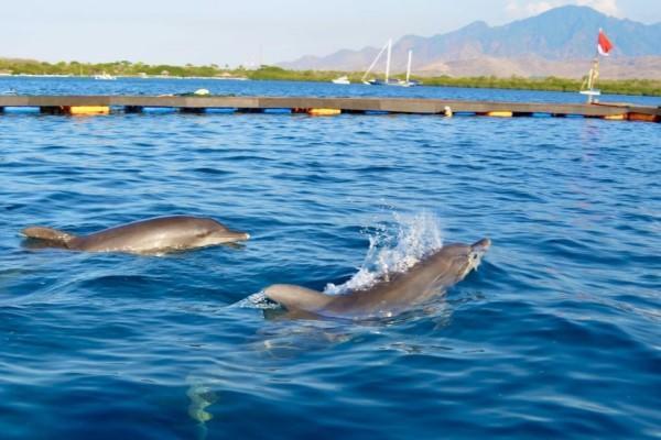 <br> 兩隻海豚一起被轉移到國家公園的海上庇護所度過餘生,終於不用再遭受虐待了(圖/Dolphin Project.com)