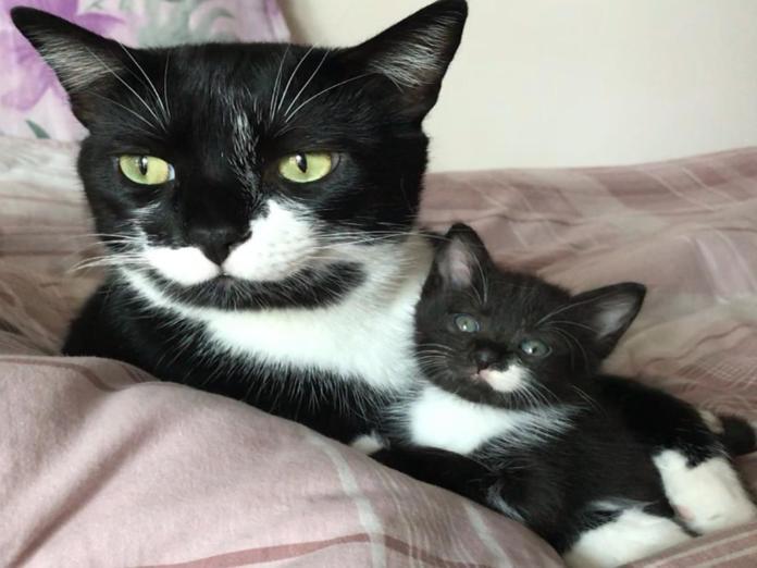 白鬍子黑白貓當起小賓賓奶爸 大貓:長大會跟我一樣帥氣!